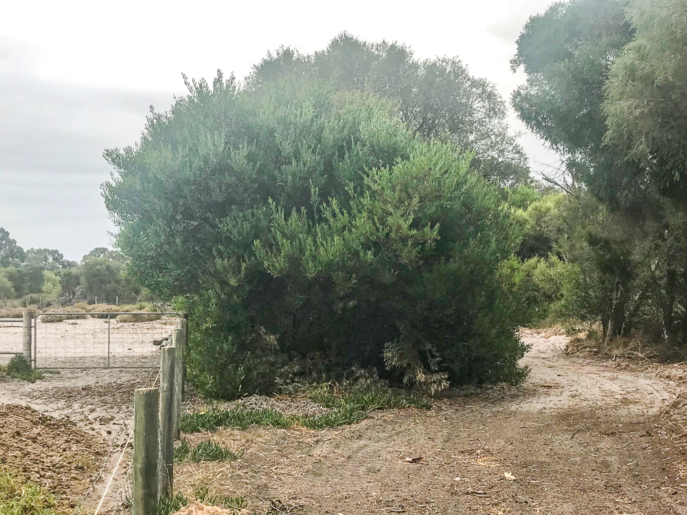 My Husband Called The Local Council To Ask If They Could Just Stick Existing Track And Leave Small Trees Along Fence Line That Provided Shade
